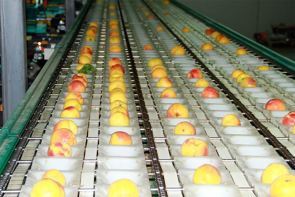 Separación de frutos según su calibre